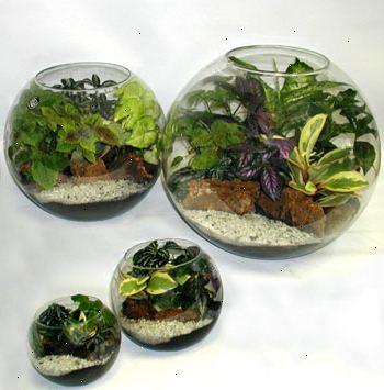 Hoe maak je een cactus terrarium te maken e2r - Hoe je een scheiding in een ruimte te maken ...